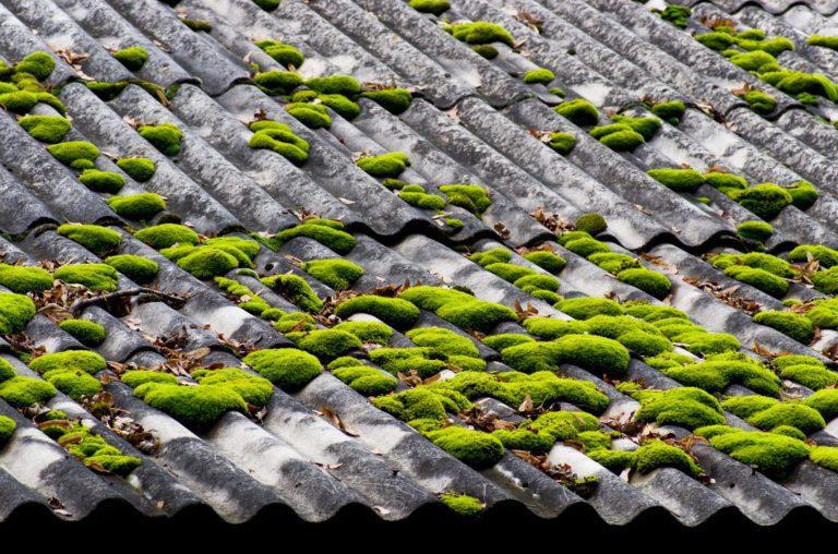 Démousser son toit et prévenir l'apparition de mousse