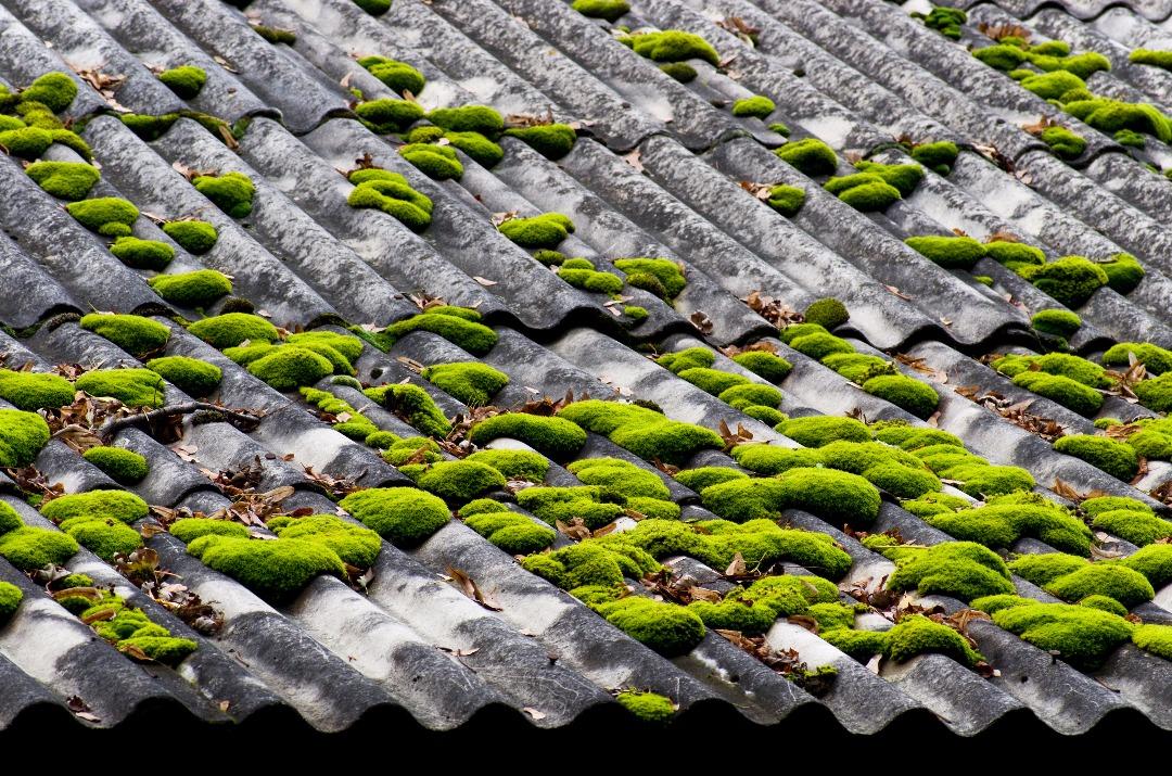 Démousser son toit et prévenir l'apparition de mousse ...